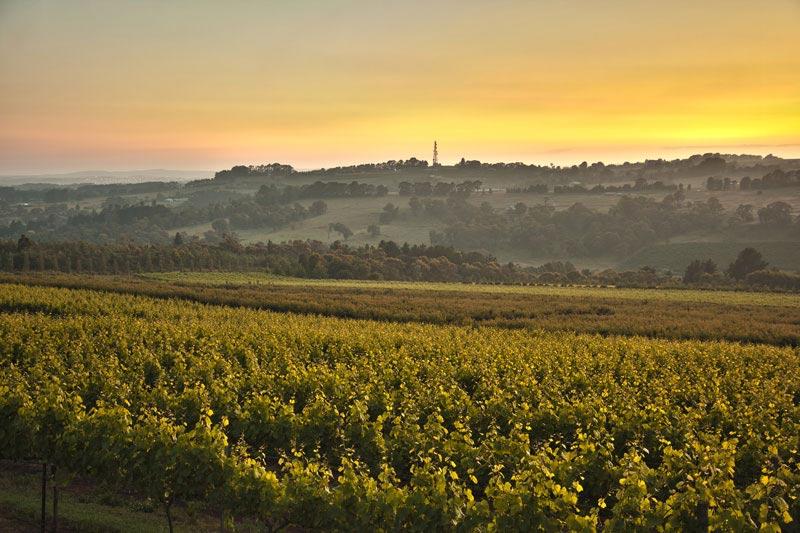 Borrodell Winery, Orange